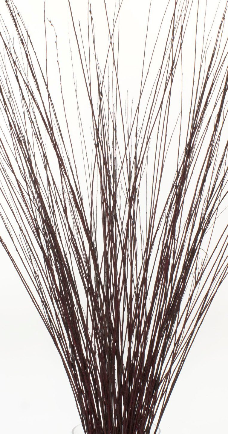 Green Floral Crafts 3-4 ft Tall Burnt Oak Asian Willow, Bunch of 50-60 Tall Sticks (Vase Not Included)