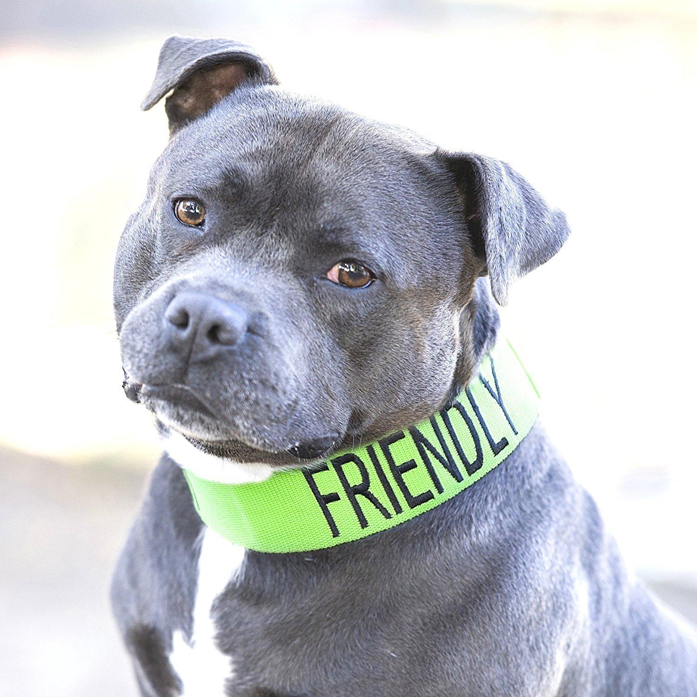 AMICAL Vert Couleur Coded Nylon large col L XXL semi-Choke Dog (connu comme Friendly) prévient les accidents en avertissant les autres de votre chien à l'avance FriendlyDogCollars