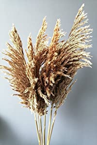 MAISONB 7pcs Dried Pampas Grass Decor Wedding Flower Bunch Natural Plants for Home Christmas Decorations Decoration Creation i. Style 6524