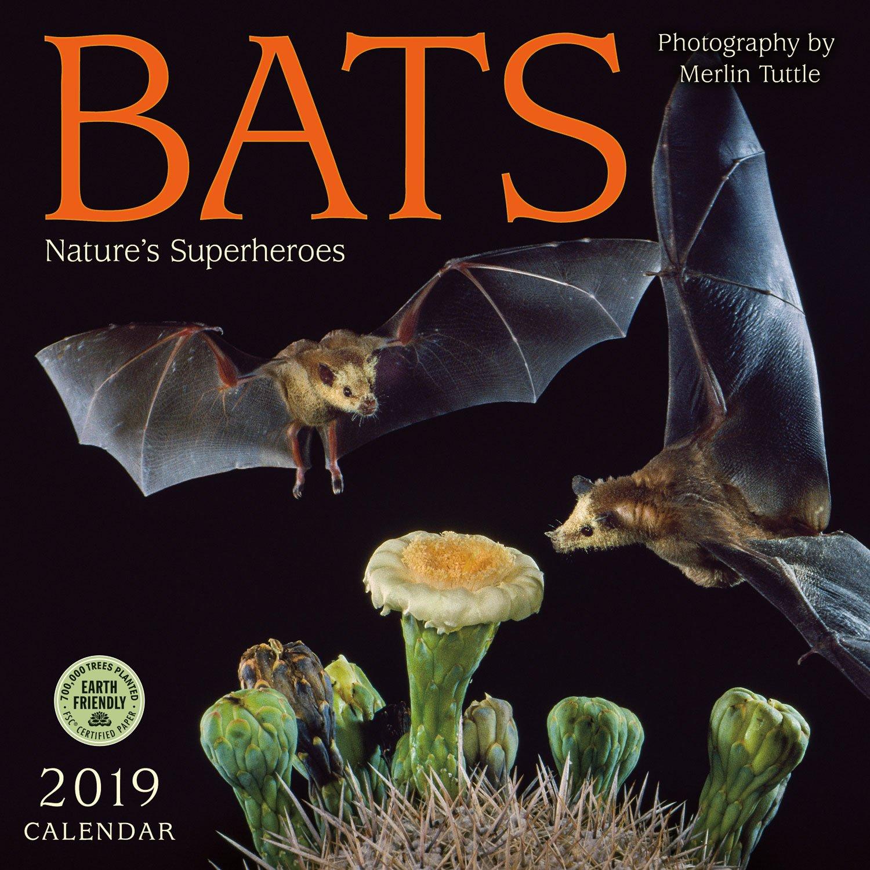 bats 2019 wall calendar natures superheroes