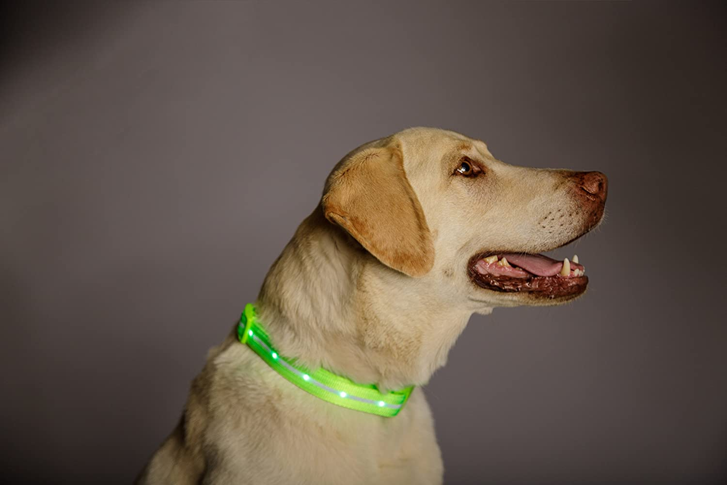 safety rechargeable led dog collar