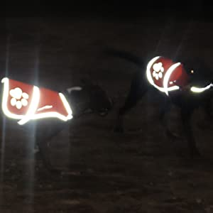 Dog Reflective Vest In Night Time