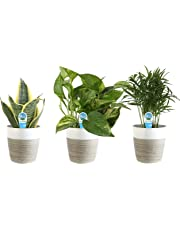 Costa Farms Clean Air 3-Pack O2 for You Live House Plant Collection, White-Natural Decor Planter, Assorted Foliage, 9-Inches Tall