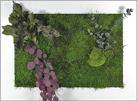 Cuadro liquen XXL - Mini Jardín Vertical para Colgar (blanco): Amazon.es: Hogar