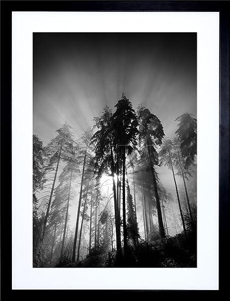 9x7 trees light fog black white framed art print picture mount photo f97x1561
