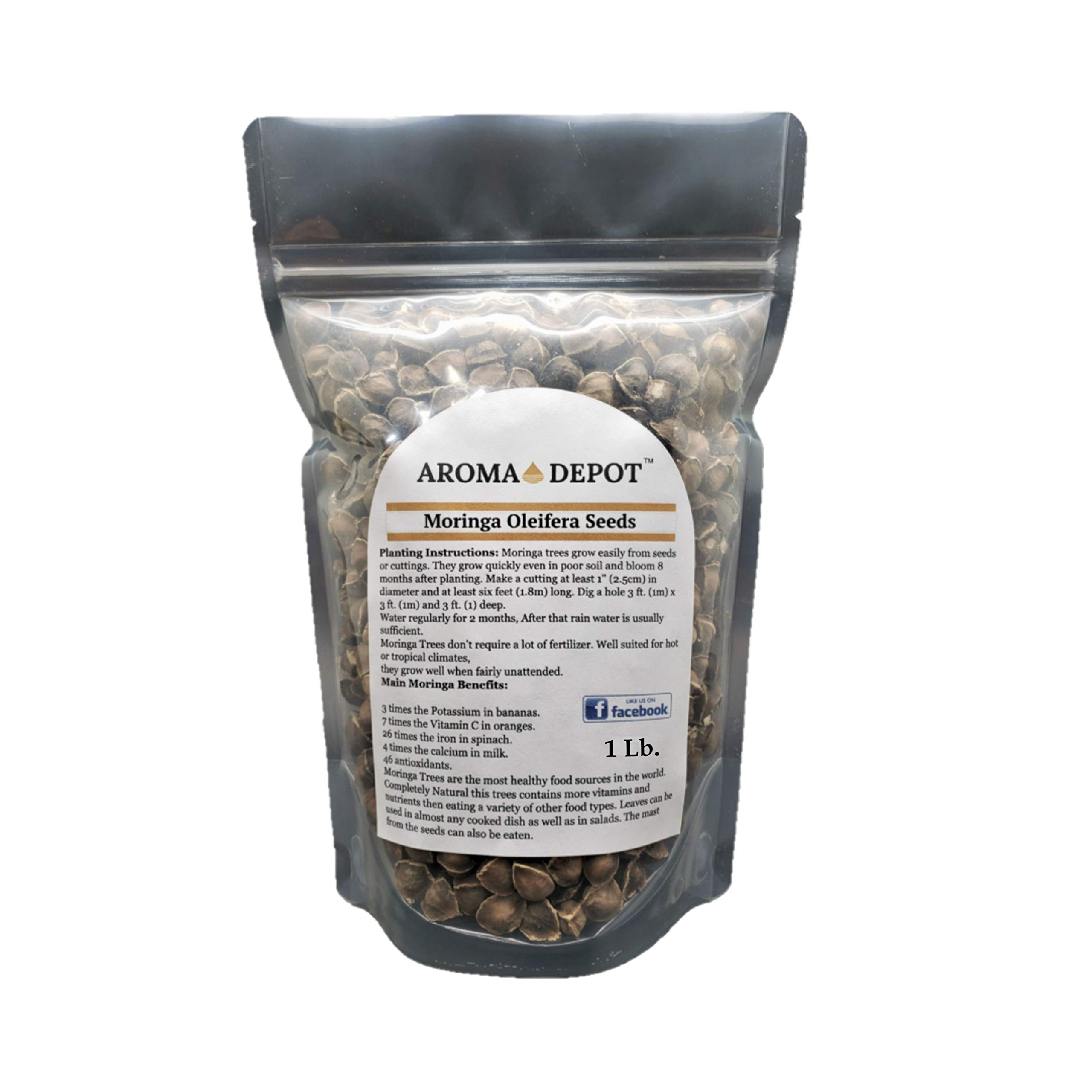 Aroma Depot 1lb / 16 oz Moringa Oleifera Seeds WINGLESS Organically Grown Sun-Dried, 100% Natural, Raw Superfood, Nutritional, Antioxidant & Anti Inflammatory Rich in Vitamins Edible Seeds, Protein by Aroma Depot (Image #2)
