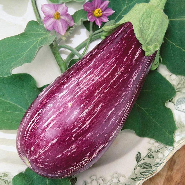 Amazon com nikitovkaseeds eggplant aubergine matrosik 250 seeds organically grown non gmo garden outdoor