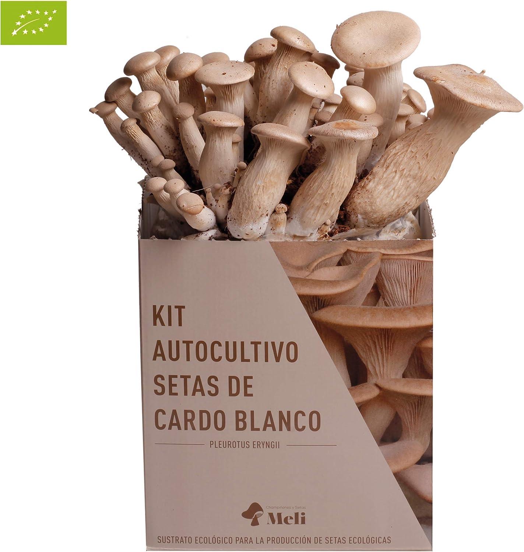 SETAS MELI | Kit Autocultivo Setas Ecológicas de Cardo Blanco | Para cultivar en casa | Crece en 10 días | Kit perfecto para regalar | Hecho en España | kit ECOLOGICO Y RECICLABLE