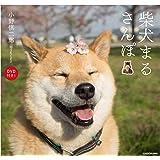 柴犬まるさんぽ DVD付き!