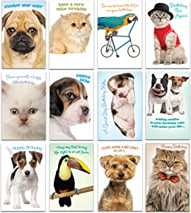 Prime Greetings 24 Funny Animal Birthday Card Assortment - Greeting Card Assortment - Funny Birthday Cards Bulk - Boxed Birthday Cards Box Set With Message inside