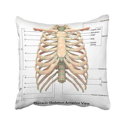 Amazon com: Emvency Blue Ache Human Skeletal System Thoracic