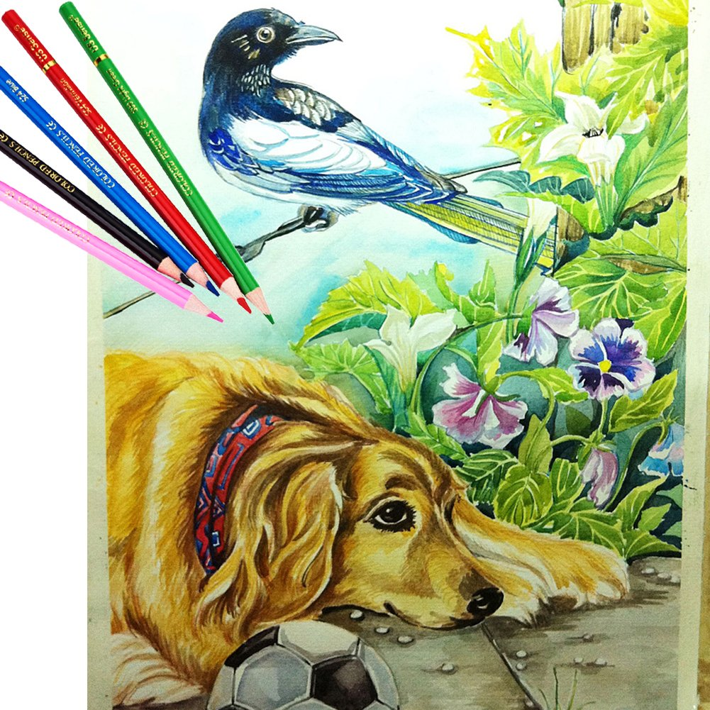 US Sense Coloured Pencils Assorted Colours Pack of 24 Drawing Oil Colouring Pencil Art Supplies Set Box for Kid Adults with Free Colouring Books