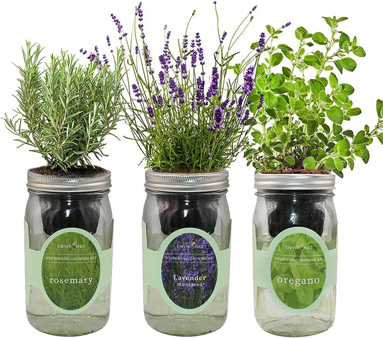 Environet Hydroponic Herb Growing Kit Set, Self-Watering Mason Jar Herb Garden Starter Kit Indoor, Grow Your Own Herbs from Seeds (Rosemary, Lavender, Oregano)