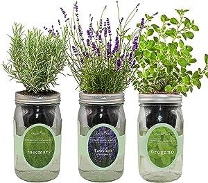 Environet Hydroponic Herb Growing Kit Set, Self-Watering Mason Jar Herb Garden Starter Kit Indoor, Grow Your Own Herbs from Seeds (Rosemary, Lavender, Oregano)
