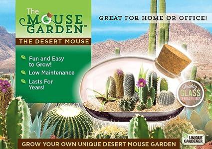 Amazoncom Mini Office Cactus Terrarium The Desert Mouse Tiny