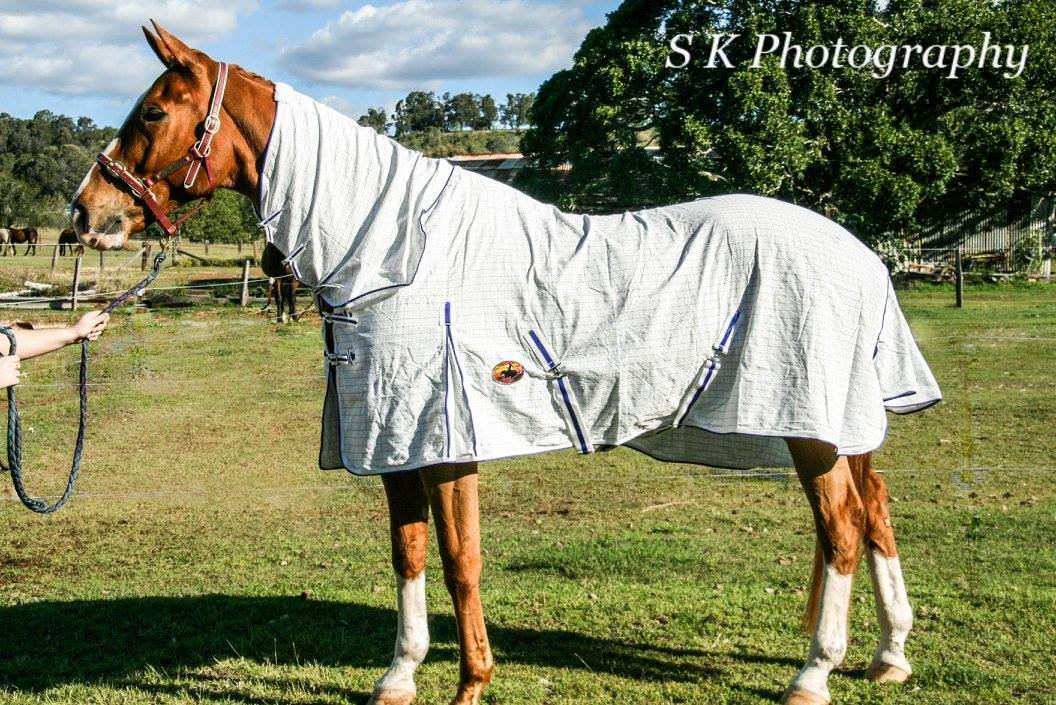 Ripstop Cotton Combo Horse Rug (6'6)
