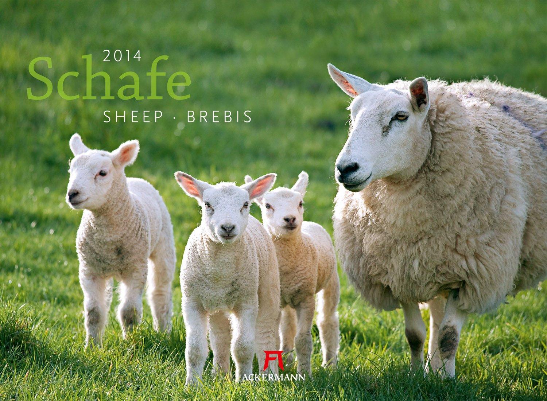 Schafe 2014
