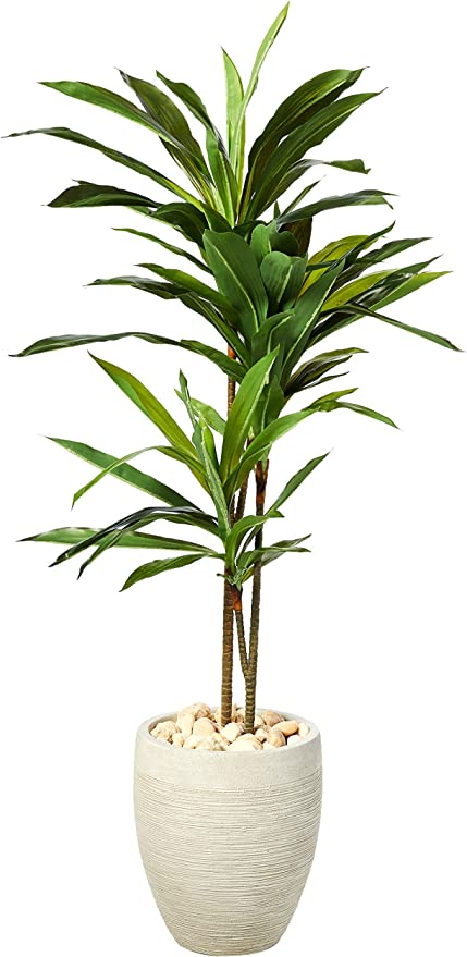 Amazon Com Nearly Natural Dracaena Artificial Plant In Sand Colored Planter 4 Home Kitchen