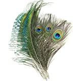 Coceca 40pcs Peacock Feathers 10-12inch and 20pcs Peacocks Sword 12-15inch for DIY Craft, Wedding Decoration