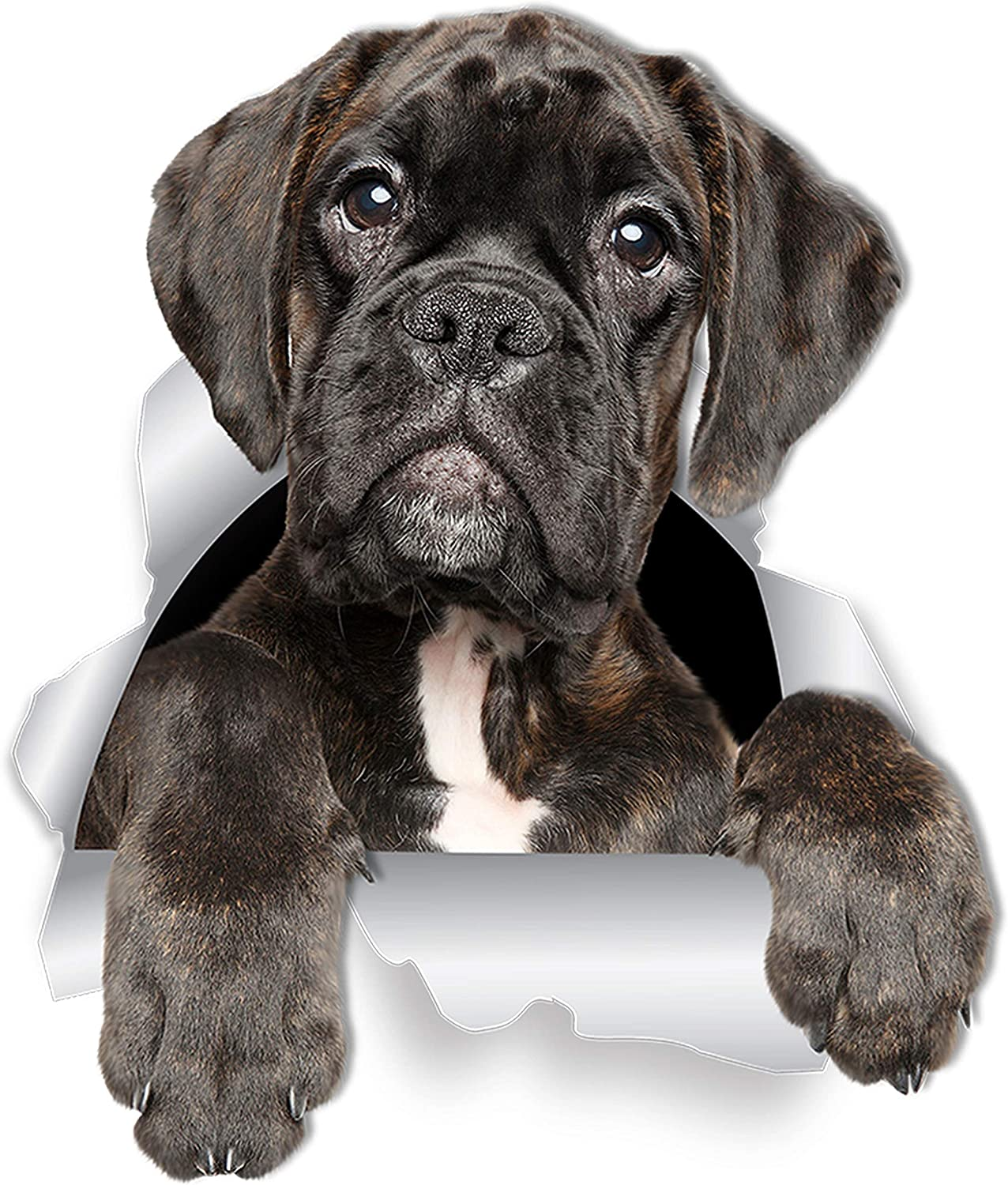 Winston & Bear Adorable Boxer Dog Wall Decals - 2 Pack - Boxer Dog 3D Sticker Decals for Walls, Cars, Toilet and More - Retail Packaged Boxer Dog Gifts