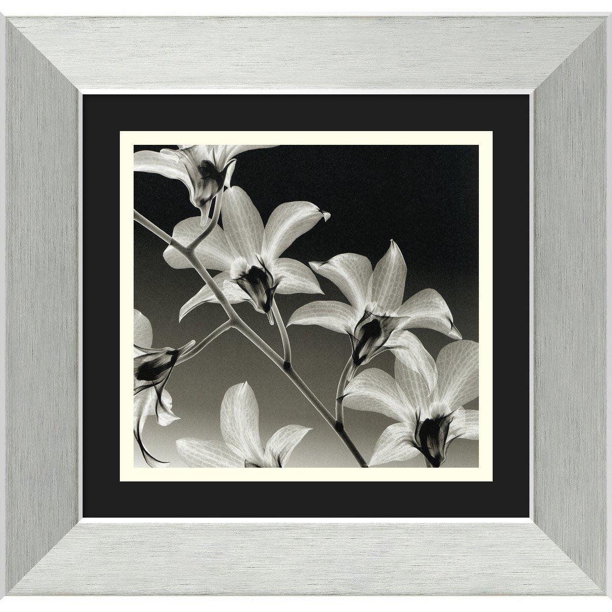 Orchid Denrobium by Steven N. Meyers, Framed Print Art - 37cm x 38cm   B002NNYSBO