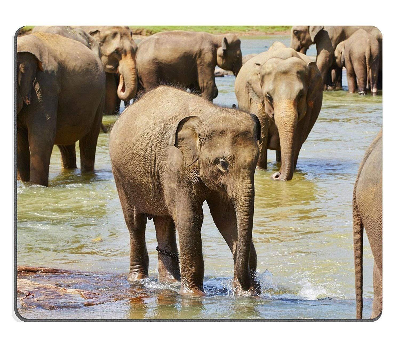 Elephant ふくらはぎマウスパッド 0003 220*180*3 mm B07L9CQWWD Fl29 300*250*3 mm 300*250*3 mm|Fl29