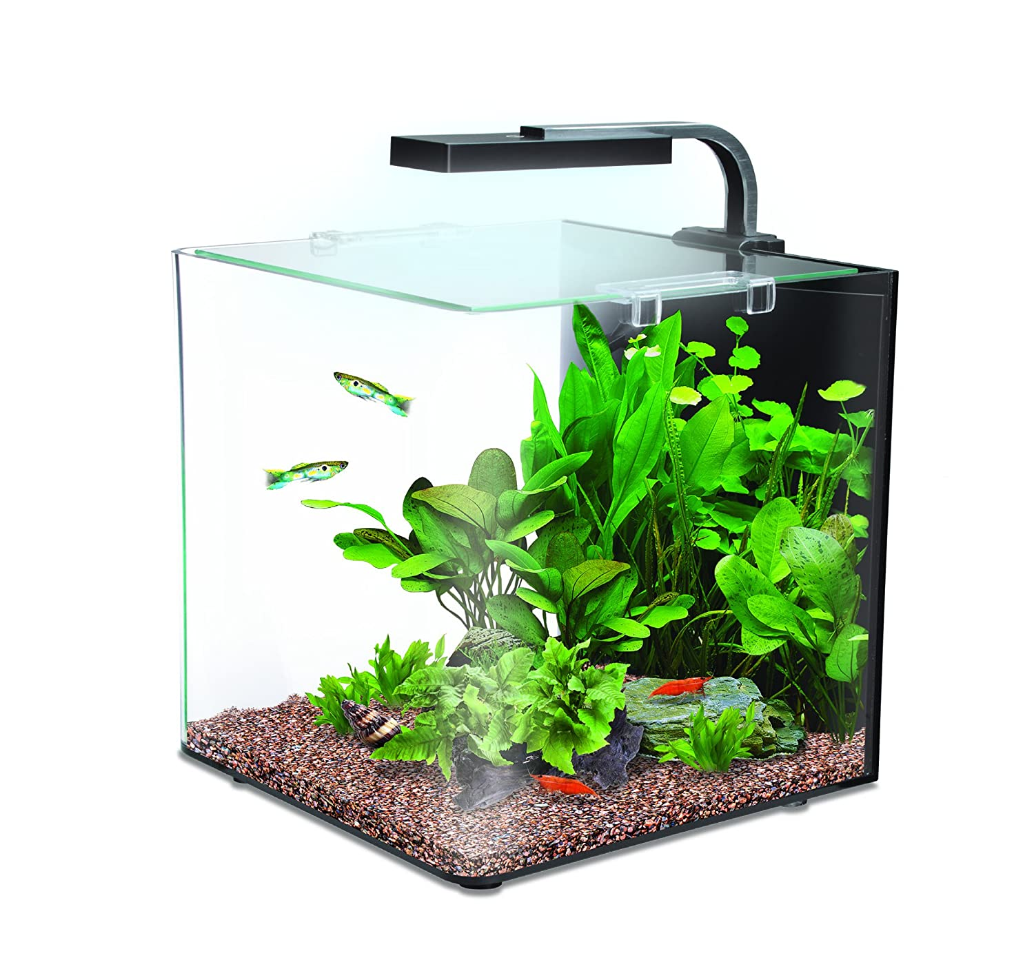 Getting back into fishtanks for Smart fish tank