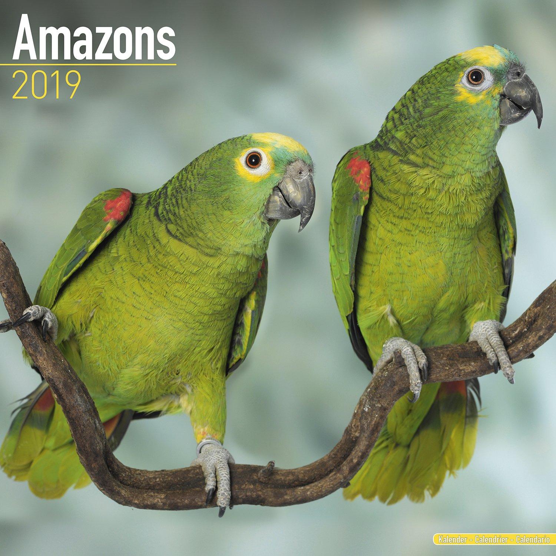 Amazon Parrot Calendar - Parrot Calendar - Bird Calendars - Calendars 2018 - 2019 Wall Calendars - Monthly Wall Calendar by Avonside