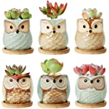 T4U Ceramic Succulent Planter Pots with Bamboo Saucers Mini Size Set of 6, Cute Owl Bonsai Pots Home and Office Decoration Desktop Windowsill Gift for Gardener Wedding Birthday Christmas