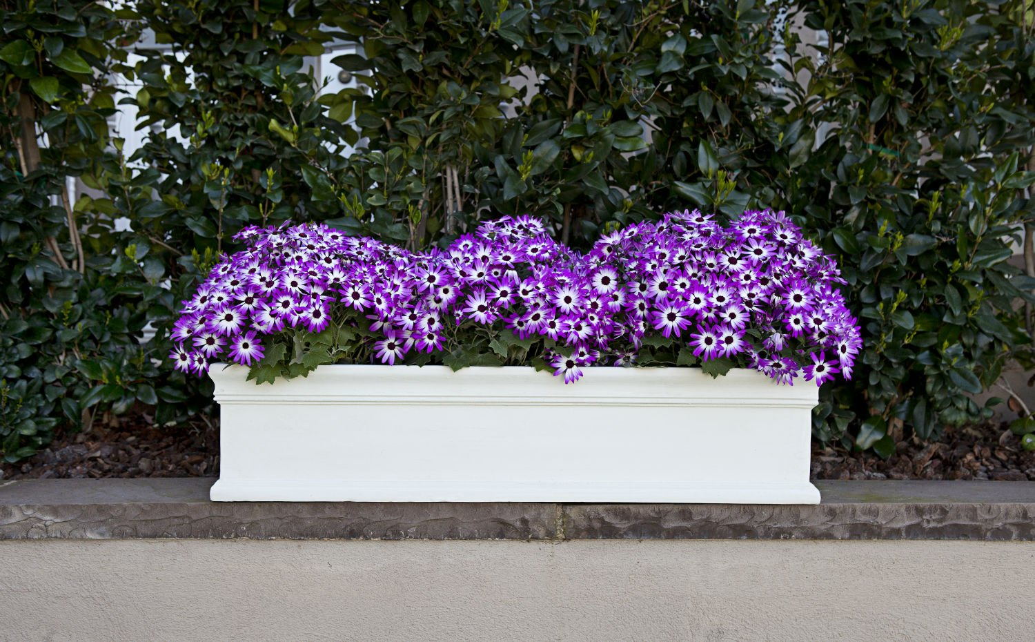 Amedeo Design ResinStone 2509-15L Classic Window Box, 37 by 9 by 9-Inch, Limestone by Amedeo Design