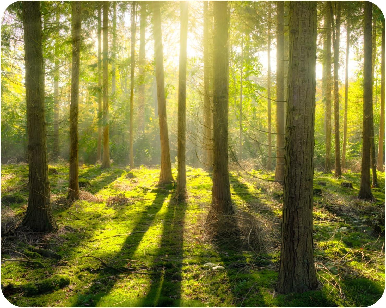 Wälder Waldweg Bäume Pfad Mauspad Mousepad 23x19cm #89247