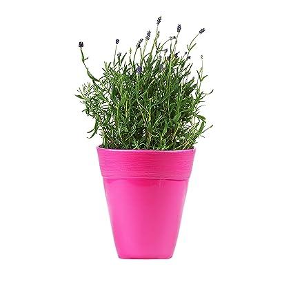 Idel dante 14 series ceramic style live solid color flower pot for idel dante 14 series ceramic style live solid color flower pot for office home use mightylinksfo
