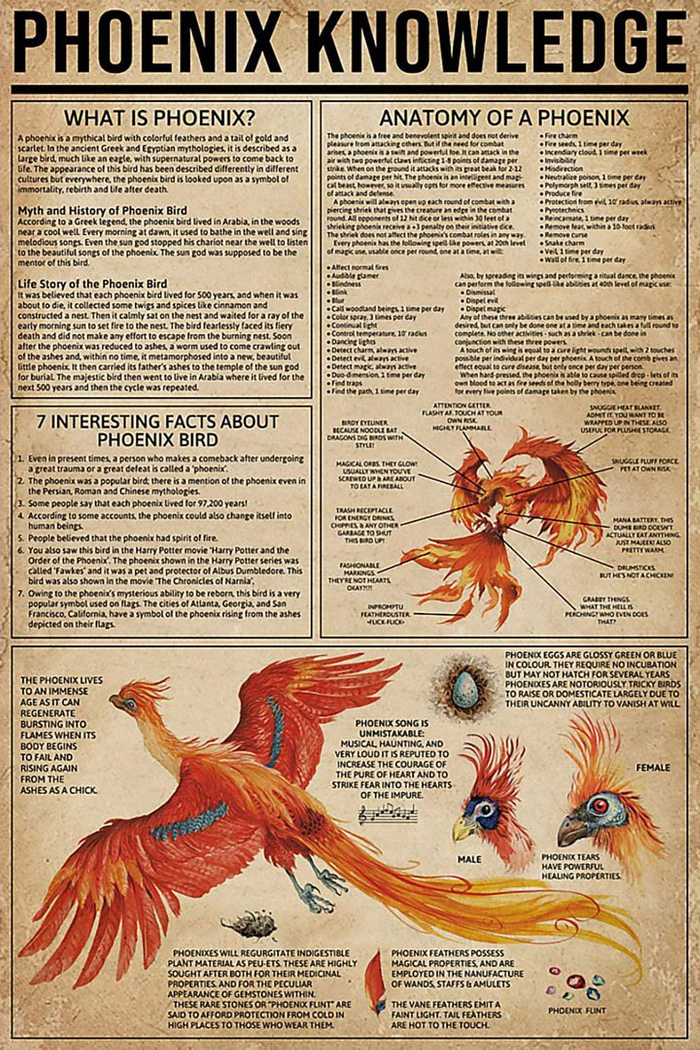 KING PRINT Phoenix Bird Knowledge Canvas Wall Art Basic Definition Anatomy 7 Interesting Facts About Phoenix Poster Wall Art Hanging Painting Paper Watercolor Living Classroom Home Decor