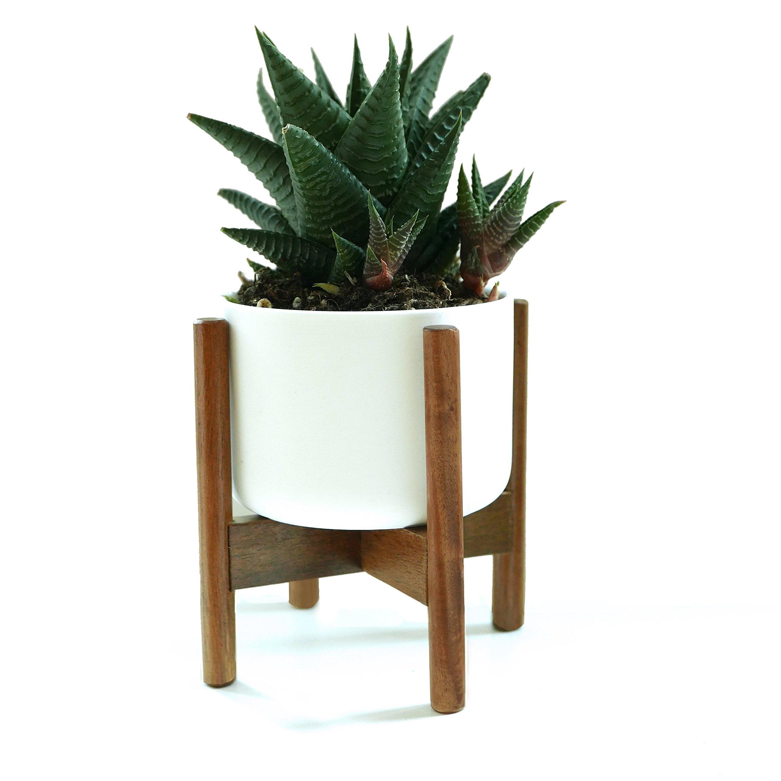 FOX & FERN Mid-Century Modern Mini Plant Stand - Acacia - Including 3.5'' White Ceramic Planter Pot by Fox & Fern