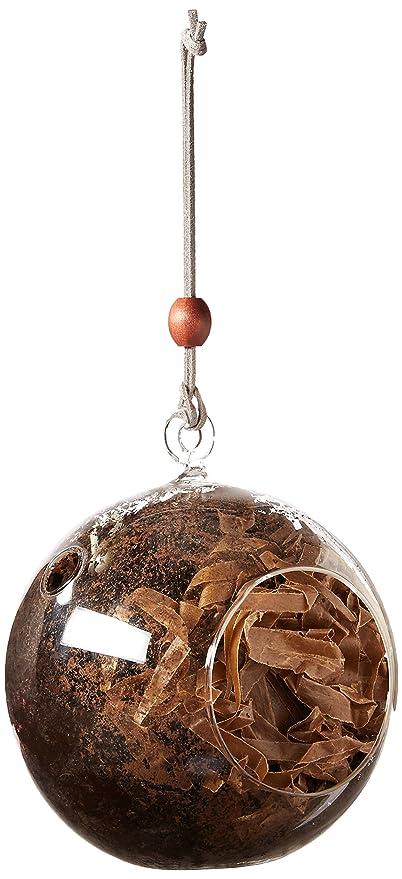 Amazon Com Hanging Globe Glass Terrarium Indoor Succulent Garden