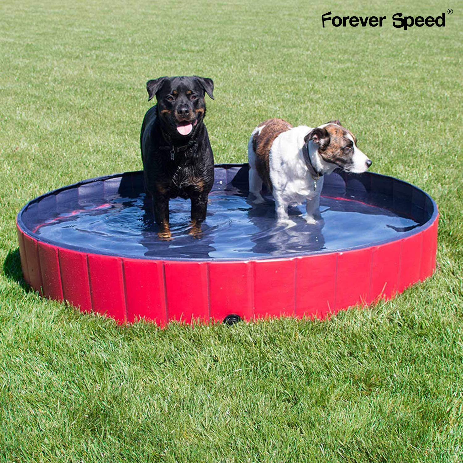 Forever Speed Piscina per Cani per Animali Portatile Pieghevole Piscina in PVC Rosso 160x30cm