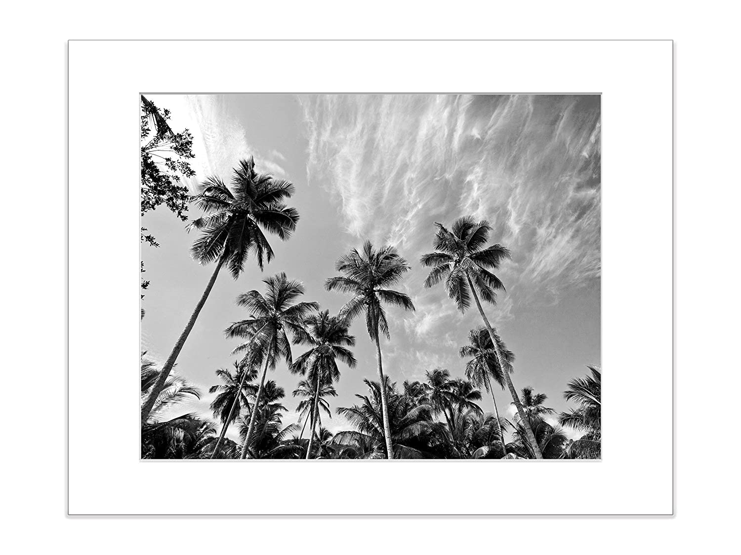 Amazon com beach photo tropical palm tree and sky 5x7 matted black and white artwork handmade