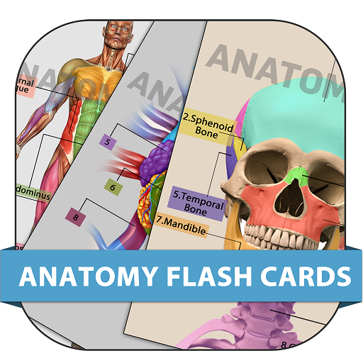 ANATOMY FLASHCARDS - Diagram Detailed The Ear Of