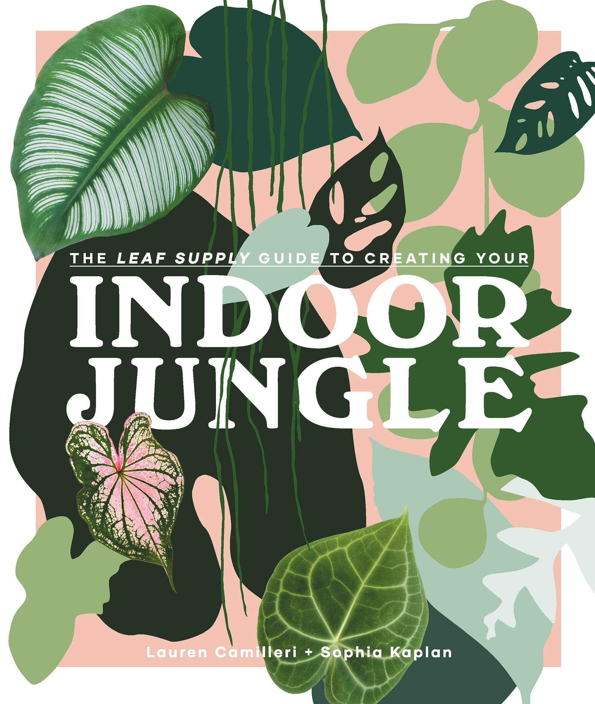 The Leaf Supply Guide To Creating Your Indoor Jungle  A Guide For Growing And Styling Foliage In Your Home