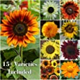 "Package of 250 Seeds, Sunflower ""Crazy Mixture"" (10+ Varieties) Open Pollinated Seeds by Seed Needs"