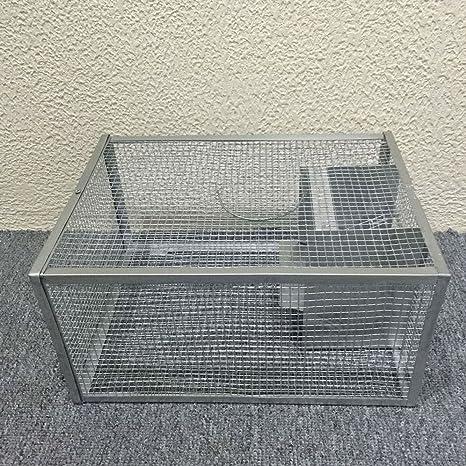 seicosy Live ratón trampa - 128.86 pulgadas jaula, jaula de ...