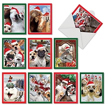 Amazon 10 assorted holiday animal selfie christmas cards 10 assorted holiday animal selfie christmas cards with envelopes mini 4 x m4hsunfo