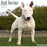 Bull Terrier Calendar 2017 - English Bull Terrier - Dog Breed Calendars - 2016 - 2017 wall calendars - 16 Month by Avonside