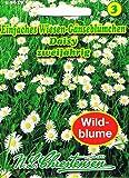 Einfaches Wiesen Gänseblümchen Daisy 'Bellis perennis' zweijährig Wildblumen