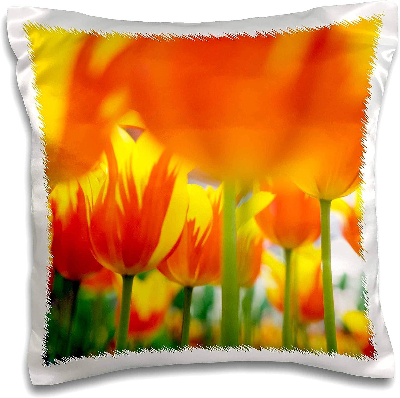 3dRose Netherlands, Lisse. Keukenhof Gardens, macro image of tulips. - Pillow Cases (pc_330363_1)