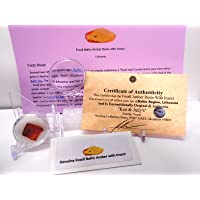 Rockhound's First Choice Baltic Amber Bundle Genuine Fossil Baltic Amber Resin with Insect Inclusion from Lithuania with Free Magnifying Glass Acrylic Display Stand Fact Sheet & COA Bundle.