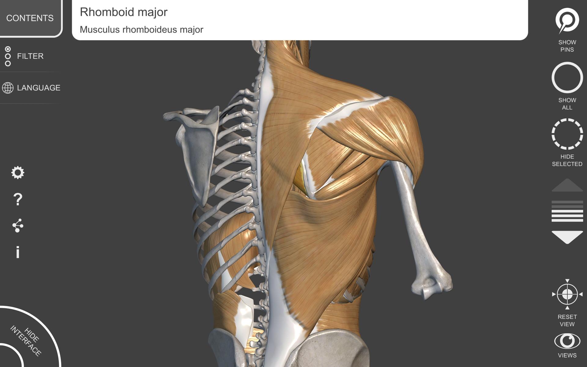 Anatomía 3D para el artista: Amazon.es: Appstore para Android
