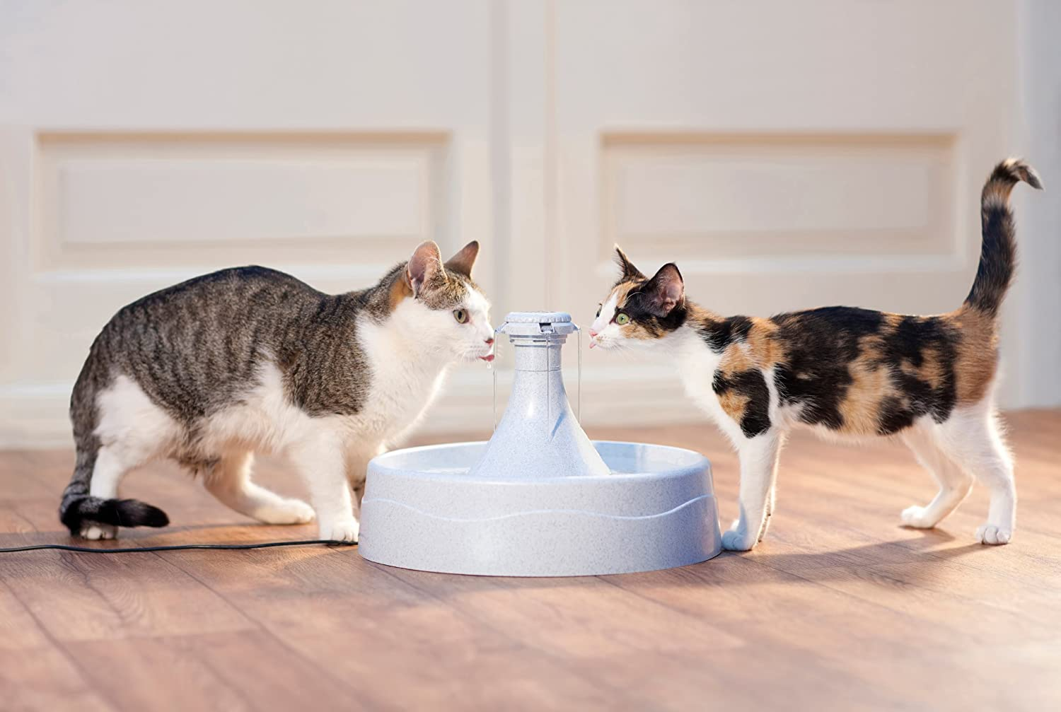 Amazon.com : PetSafe Drinkwell 360 Dog and Cat Water Fountain, 128 ...