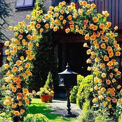 YENJO Seeds-100Pcs Perfume Climbing Plants Colorful Rock Cress Flower Seeds : Garden & Outdoor