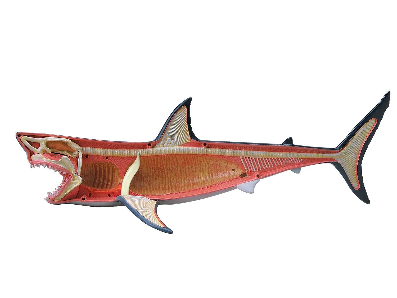 Revell X-Ray 02098 - Modelo anatómico de tiburón blanco: Amazon.es ...